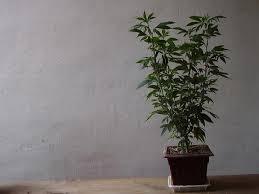 Wenn man das nicht einhält werden sie die Pflanze langsam aber sicher ausrotten.