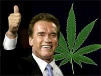 Schwarzenegger ist für Marihuana