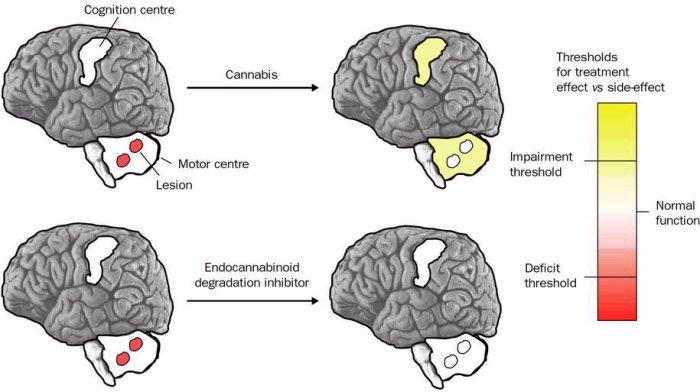 endocannabinoid-system Angststörungen