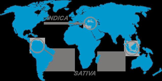 Indica und Sativa map