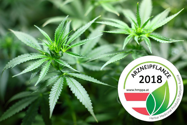 Arzneipflanze des Jahres 2018 – Cannabis Sativa