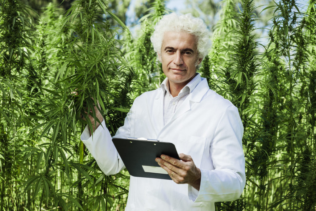 Cannabis Produzent